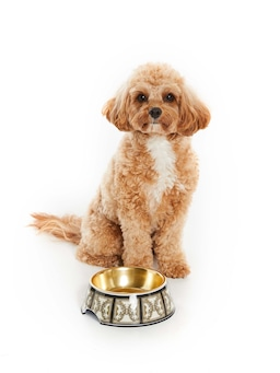 Donatella Dog Bowl