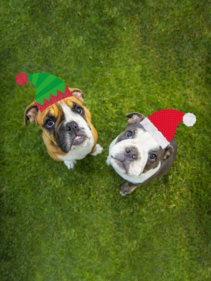 Festive Pet Photo Booth